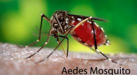 Aedes Mosquito - Zika Virus